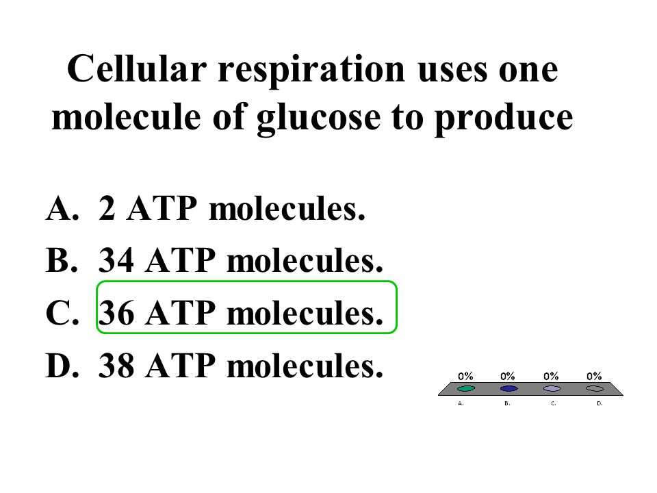 Cellular respiration uses one molecule of glucose to produce A.2 ATP molecules. B.34 ATP molecules. C.36 ATP molecules. D.38 ATP molecules.