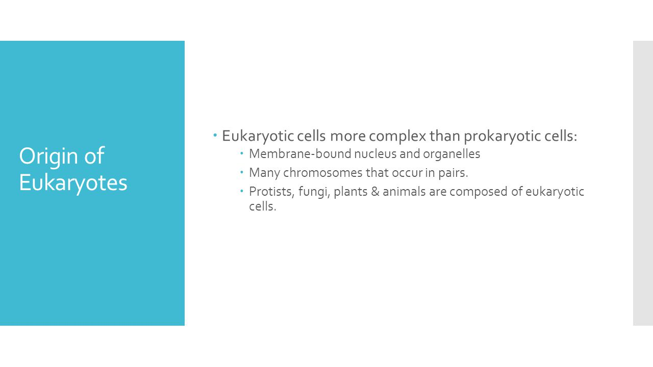 Origin of Eukaryotes  Eukaryotic cells more complex than prokaryotic cells:  Membrane-bound nucleus and organelles  Many chromosomes that occur in pairs.
