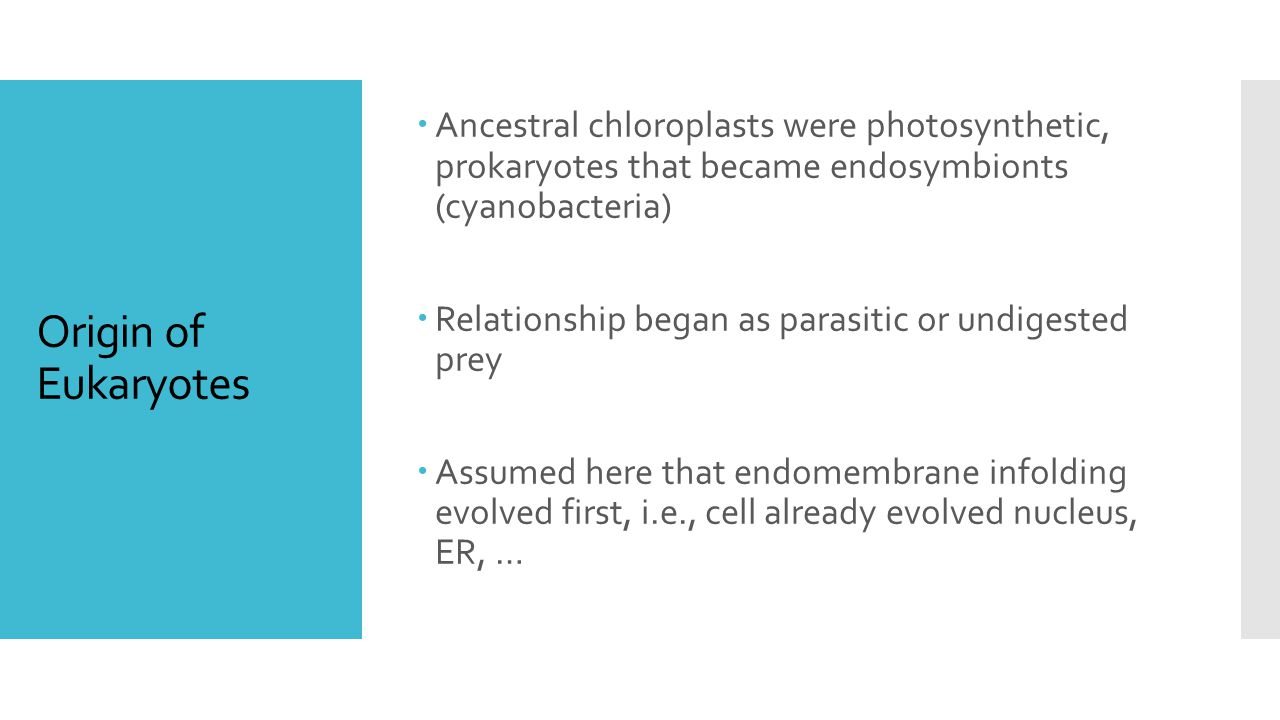 Origin of Eukaryotes  Ancestral chloroplasts were photosynthetic, prokaryotes that became endosymbionts (cyanobacteria)  Relationship began as parasitic or undigested prey  Assumed here that endomembrane infolding evolved first, i.e., cell already evolved nucleus, ER, …
