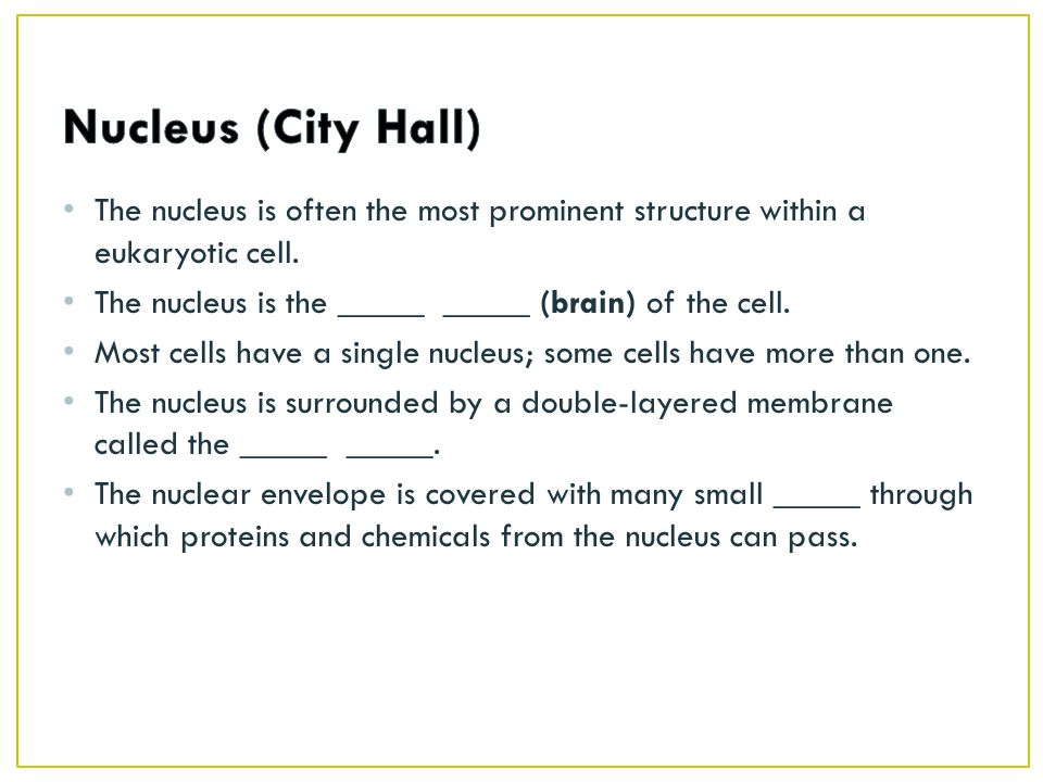 The nucleus is often the most prominent structure within a eukaryotic cell.