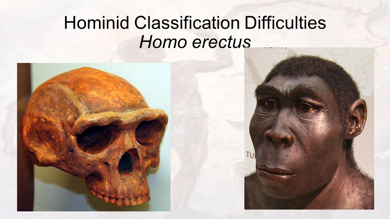 Hominid Classification Difficulties Homo erectus