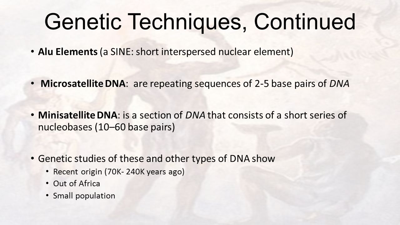 Genetic Techniques, Continued Alu Elements (a SINE: short interspersed nuclear element) Microsatellite DNA: are repeating sequences of 2-5 base pairs of DNA Minisatellite DNA: is a section of DNA that consists of a short series of nucleobases (10–60 base pairs) Genetic studies of these and other types of DNA show Recent origin (70K- 240K years ago) Out of Africa Small population