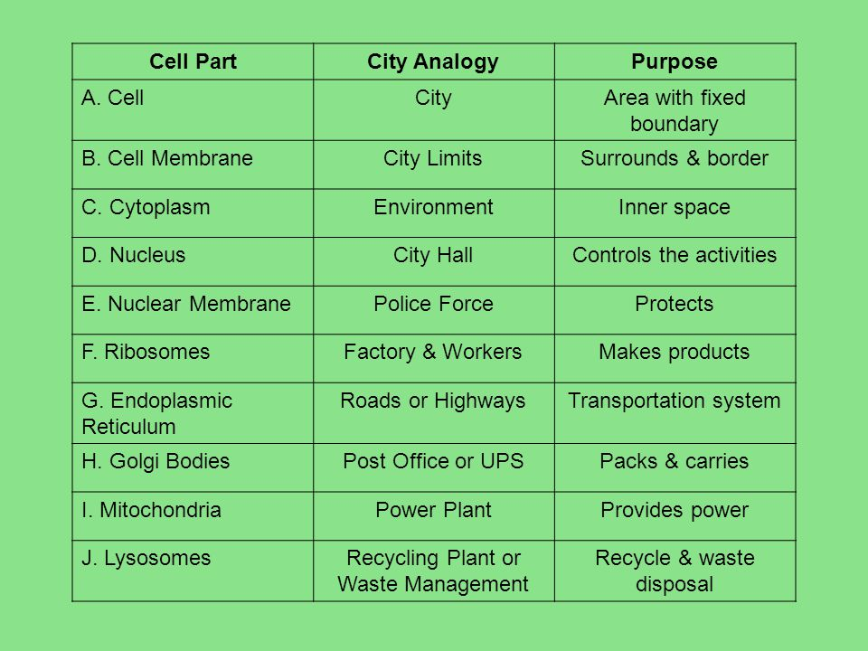 Cell PartCity AnalogyPurpose A. CellCityArea with fixed boundary B.