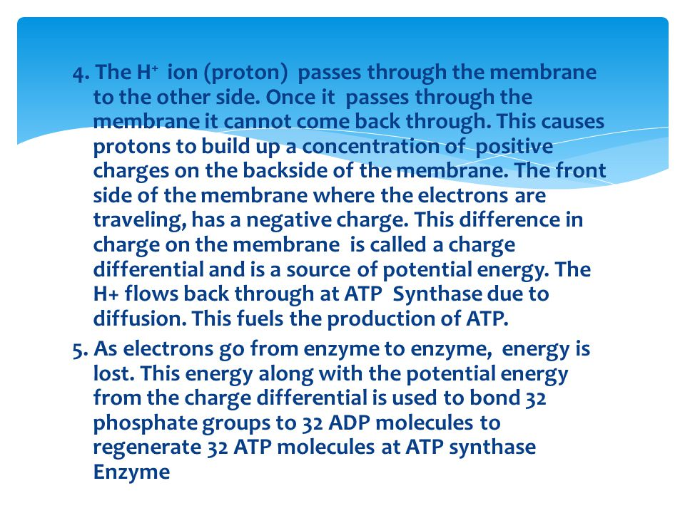 4. The H + ion (proton) passes through the membrane to the other side.