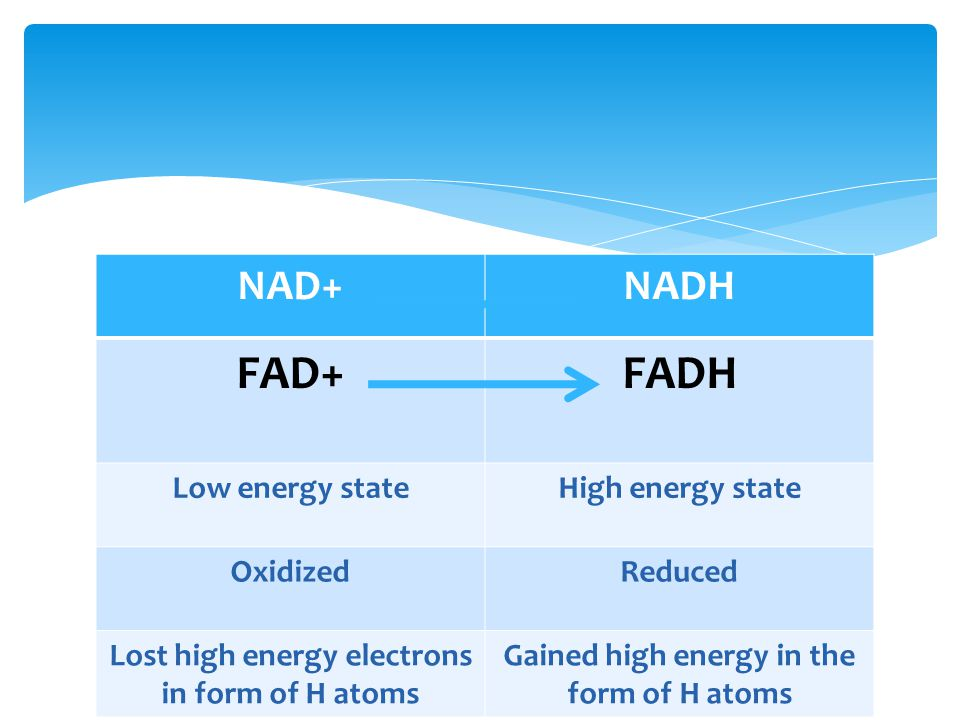 NAD+NADH FAD+FADH Low energy stateHigh energy state OxidizedReduced Lost high energy electrons in form of H atoms Gained high energy in the form of H atoms