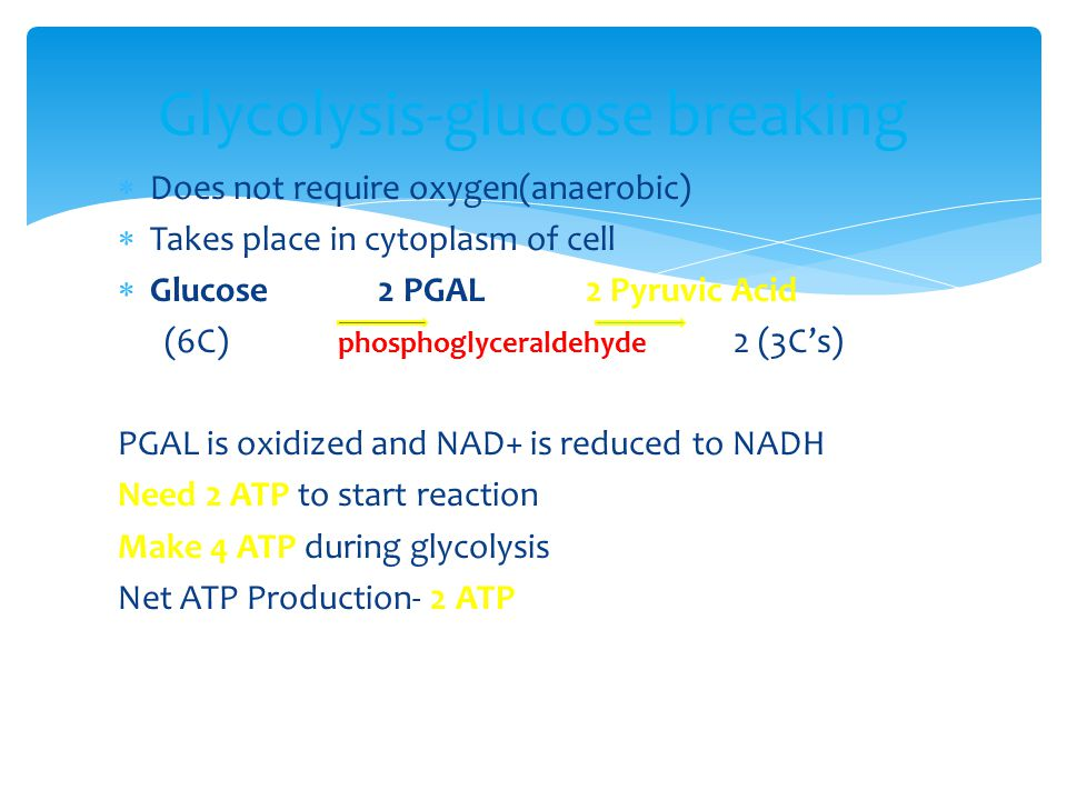  Does not require oxygen(anaerobic)  Takes place in cytoplasm of cell  Glucose 2 PGAL 2 Pyruvic Acid (6C) phosphoglyceraldehyde 2 (3C's) PGAL is oxidized and NAD+ is reduced to NADH Need 2 ATP to start reaction Make 4 ATP during glycolysis Net ATP Production- 2 ATP Glycolysis-glucose breaking