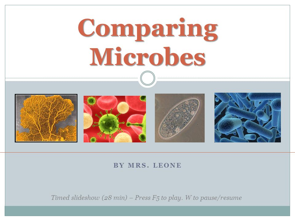 BY MRS. LEONE Comparing Microbes Timed slideshow (28 min) – Press F5 to play. W to pause/resume