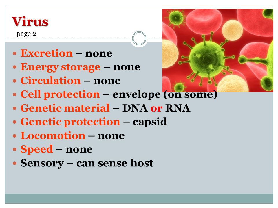 Virus Excretion – none Energy storage – none Circulation – none Cell protection – envelope (on some) Genetic material – DNA or RNA Genetic protection – capsid Locomotion – none Speed – none Sensory – can sense host page 2