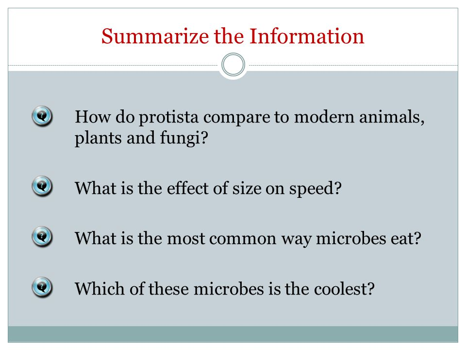 Summarize the Information How do protista compare to modern animals, plants and fungi.