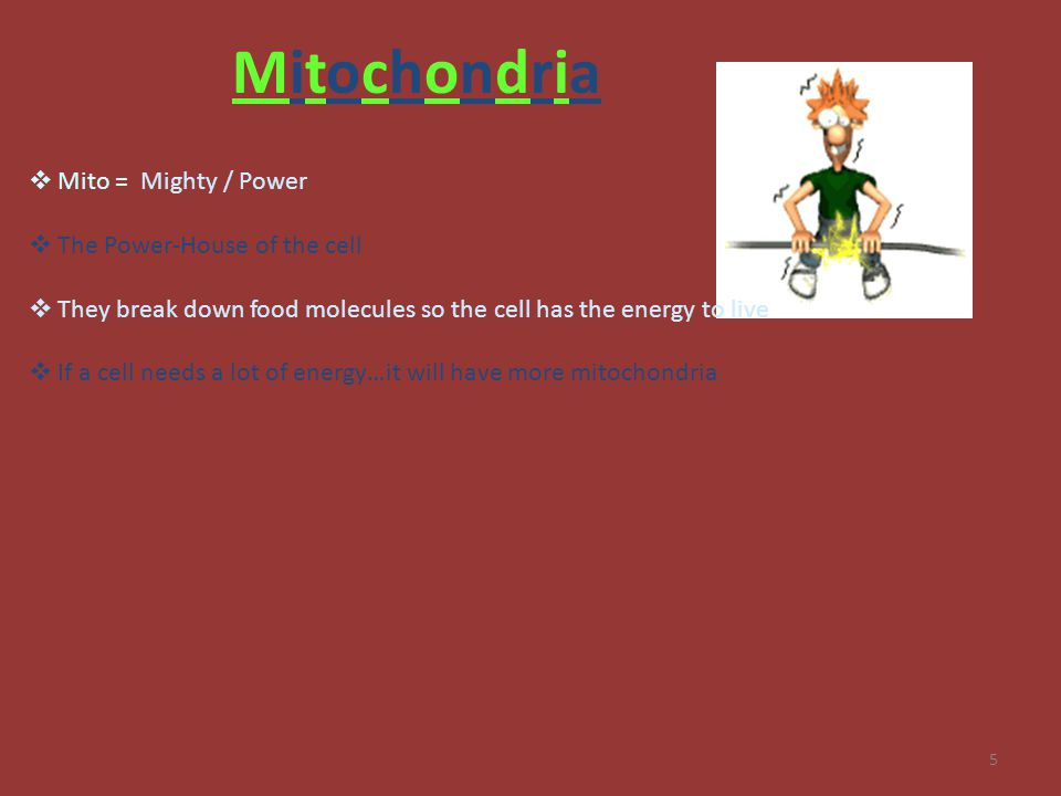 5 MitochondriaMitochondria  Mito = Mighty / Power  The Power-House of the cell  They break down food molecules so the cell has the energy to live 