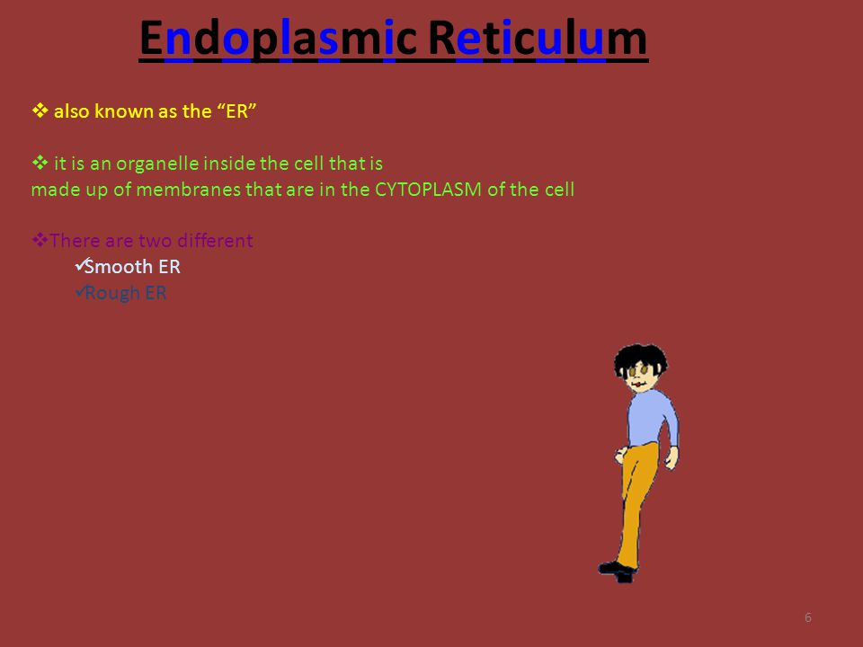 "6 Endoplasmic Reticulum  also known as the ""ER""  it is an organelle inside the cell that is made up of membranes that are in the CYTOPLASM of the ce"