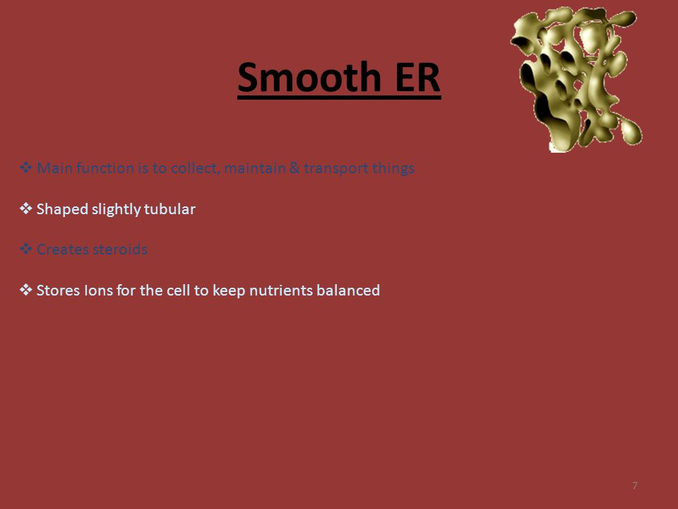 7 Smooth ER  Main function is to collect, maintain & transport things  Shaped slightly tubular  Creates steroids  Stores Ions for the cell to keep