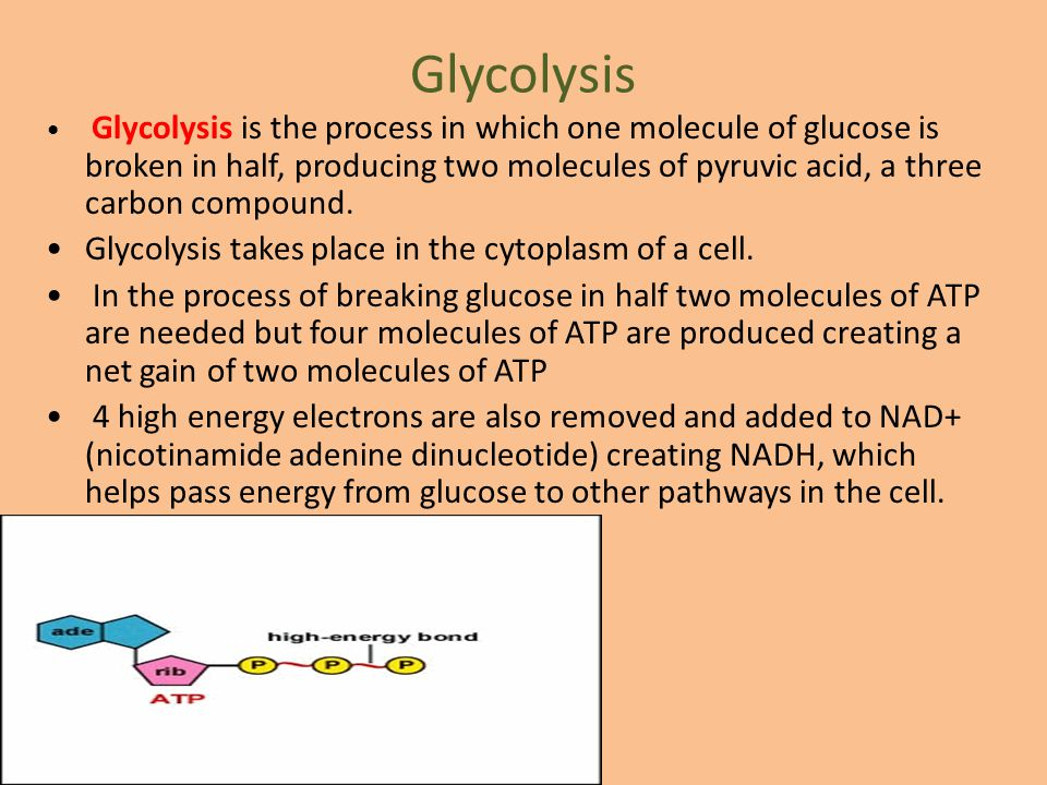Glycolysis Glycolysis is the process in which one molecule of glucose is broken in half, producing two molecules of pyruvic acid, a three carbon compo