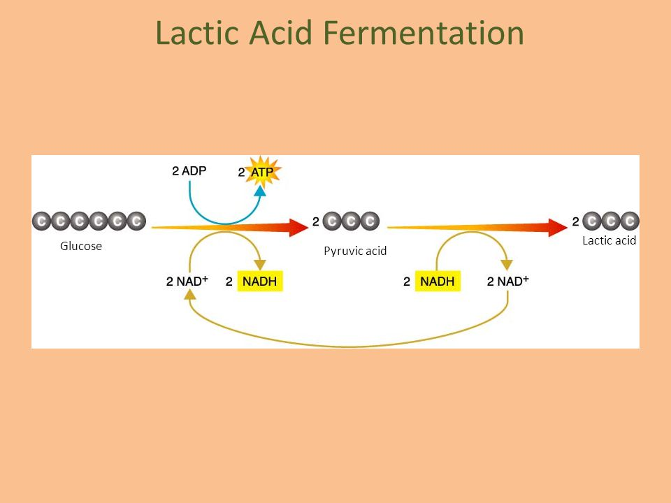 Glucose Pyruvic acid Lactic acid Lactic Acid Fermentation