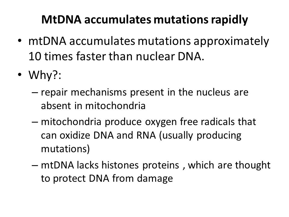MtDNA accumulates mutations rapidly mtDNA accumulates mutations approximately 10 times faster than nuclear DNA. Why?: – repair mechanisms present in t