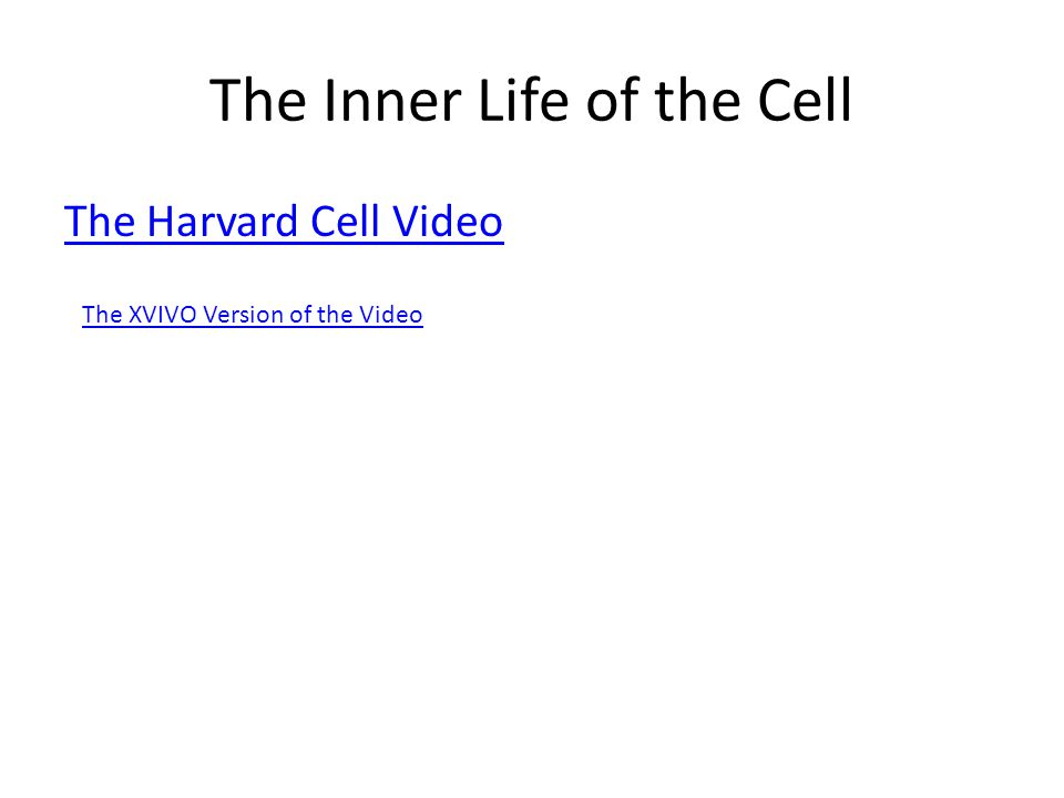 The Inner Life of the Cell The Harvard Cell Video The XVIVO Version of the Video