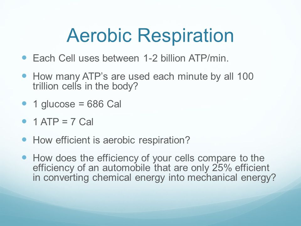 Aerobic Respiration Each Cell uses between 1-2 billion ATP/min.