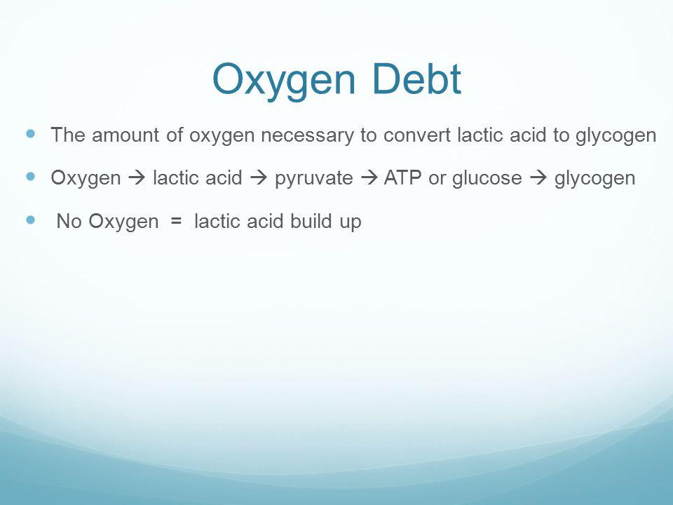 Oxygen Debt The amount of oxygen necessary to convert lactic acid to glycogen Oxygen  lactic acid  pyruvate  ATP or glucose  glycogen No Oxygen = lactic acid build up