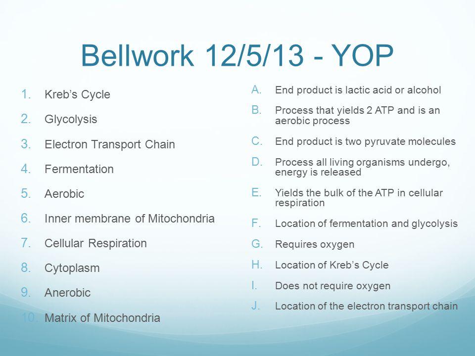 Bellwork 12/5/13 - YOP 1. Kreb's Cycle 2. Glycolysis 3.