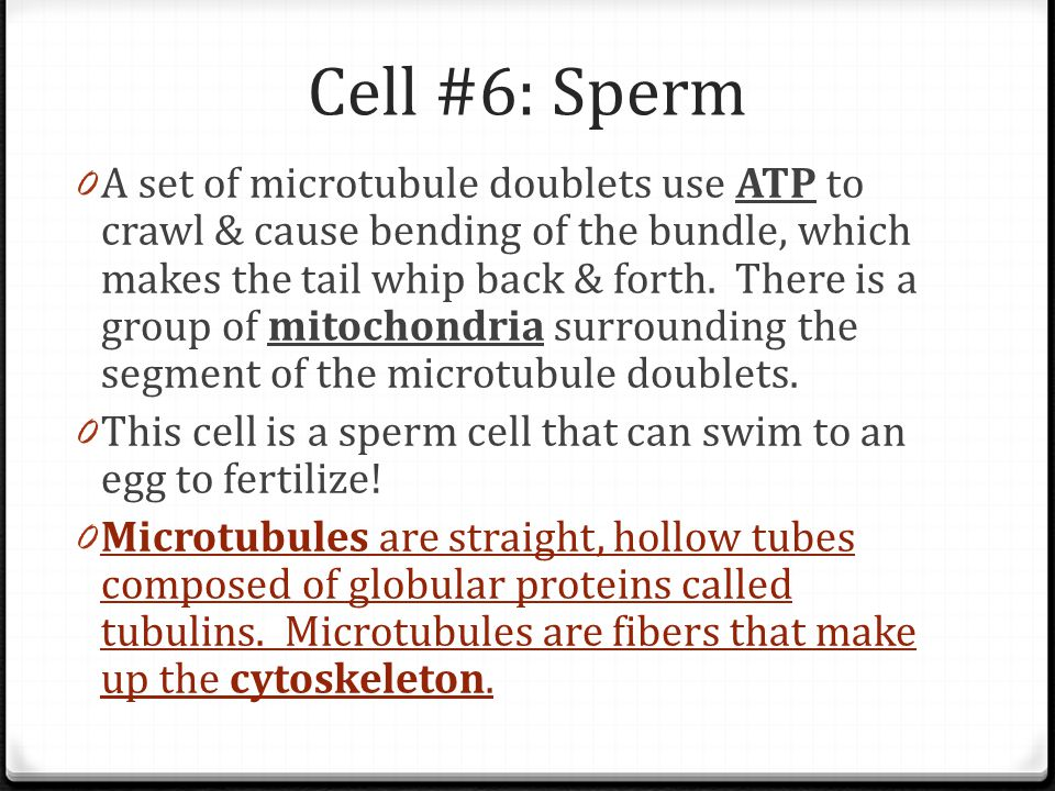 Cell #6: Sperm 0 A set of microtubule doublets use ATP to crawl & cause bending of the bundle, which makes the tail whip back & forth. There is a grou