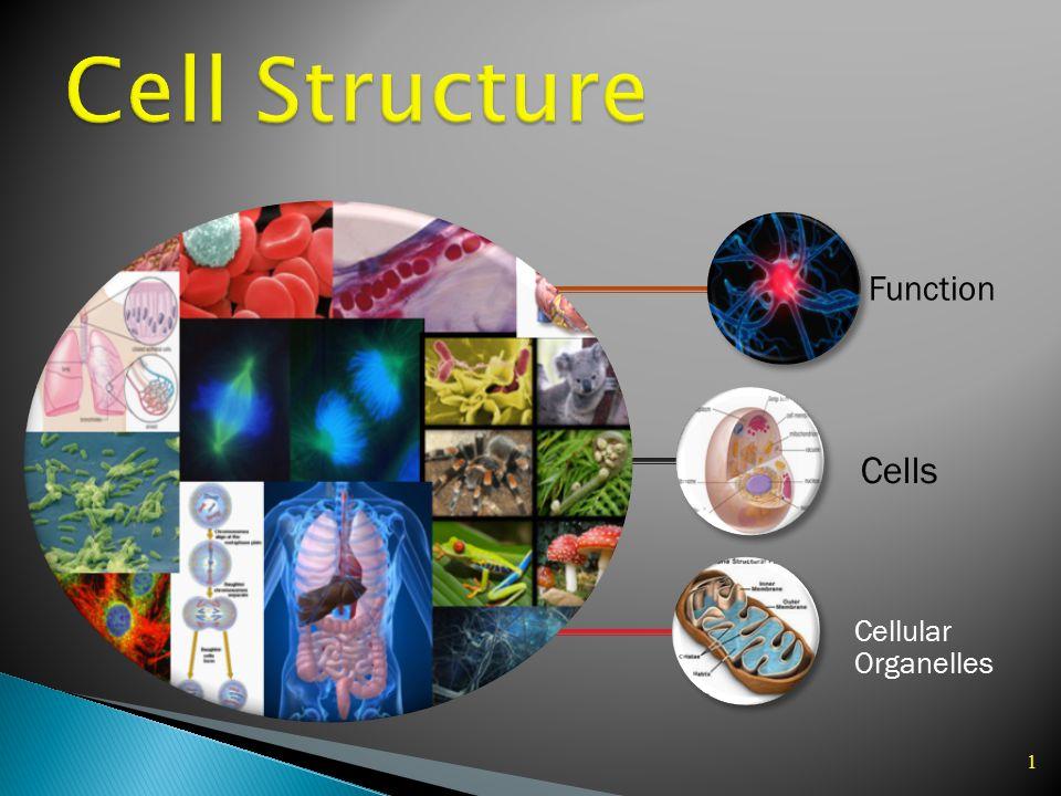 1 Function Cellular Organelles Cells