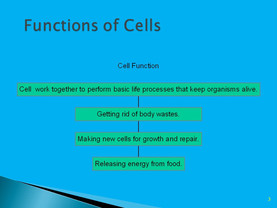 13 Powerhouse of the cell – Uses Glucose to provide cells with energy (Cellular Respiration) Glucose + Oxygen  Carbon Dioxide + Water + Energy Cells that use a lot of energy have more Structure - outer and inner membranes