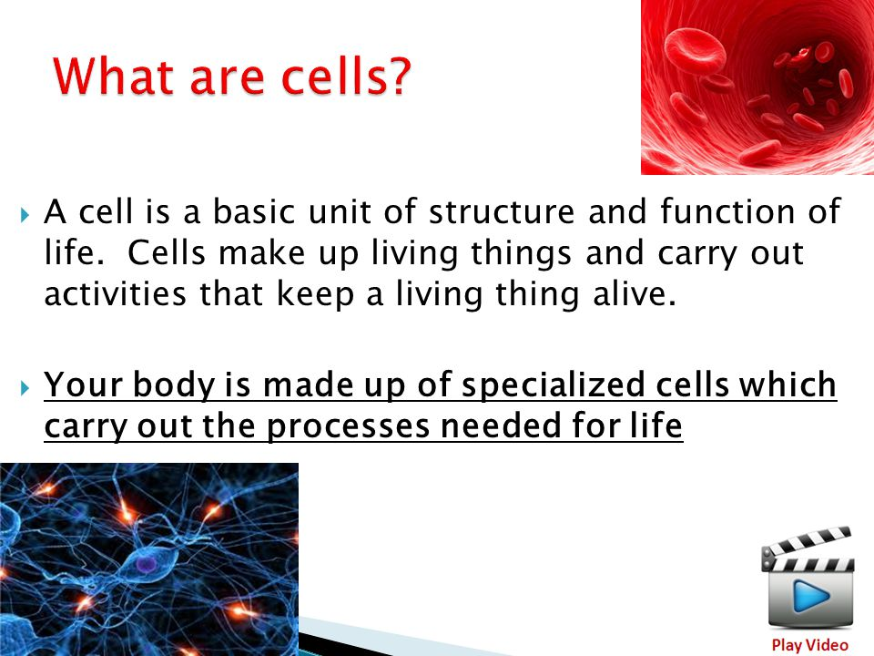 4  A cell is a basic unit of structure and function of life.