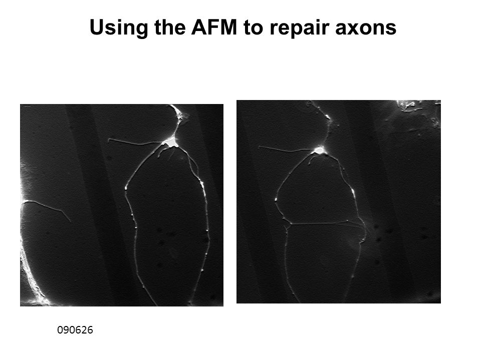 090626 Using the AFM to repair axons