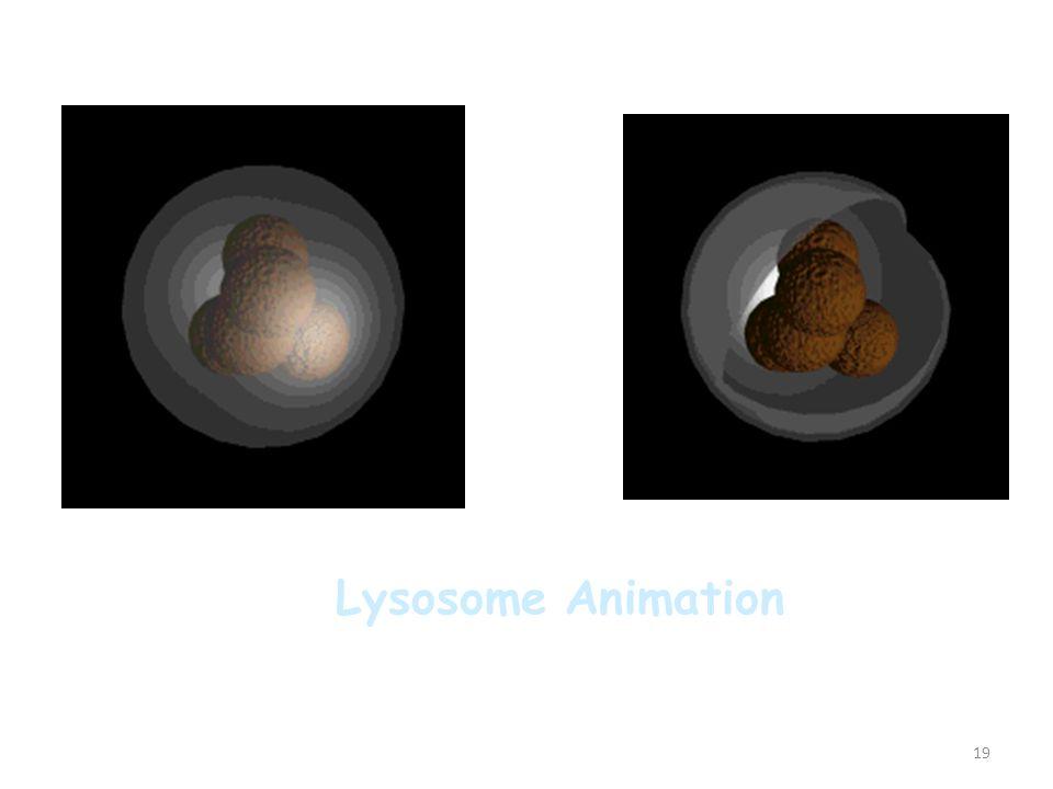19 Lysosome Animation