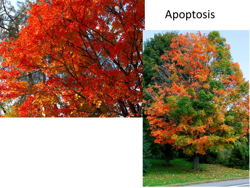 Can autophagy promote longevity.