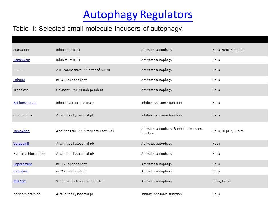 Autophagy Regulators TreatmentTargetEffectCell Line StarvationInhibits (mTOR)Activates autophagyHeLa, HepG2, Jurkat RapamycinInhibits (mTOR)Activates