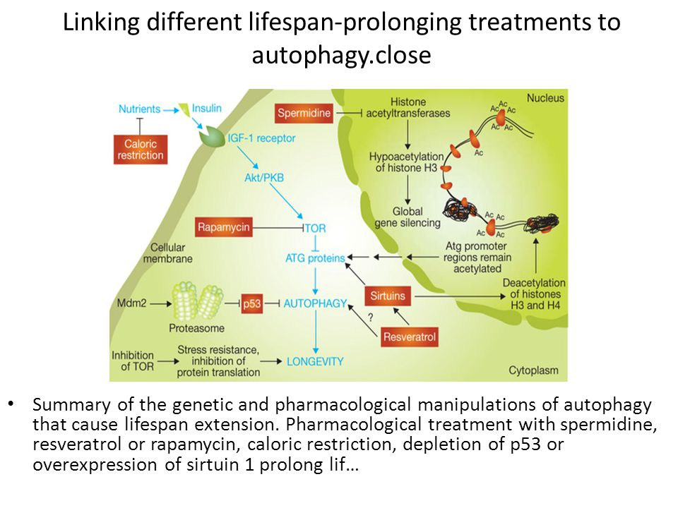 Linking different lifespan-prolonging treatments to autophagy.close Summary of the genetic and pharmacological manipulations of autophagy that cause l