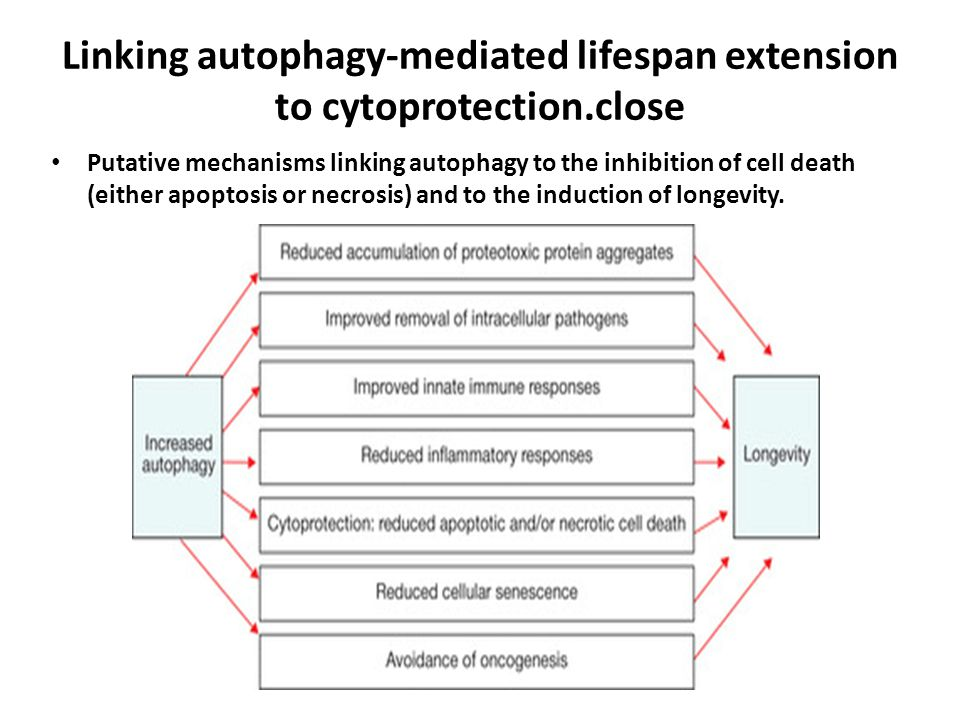 Linking autophagy-mediated lifespan extension to cytoprotection.close Putative mechanisms linking autophagy to the inhibition of cell death (either ap
