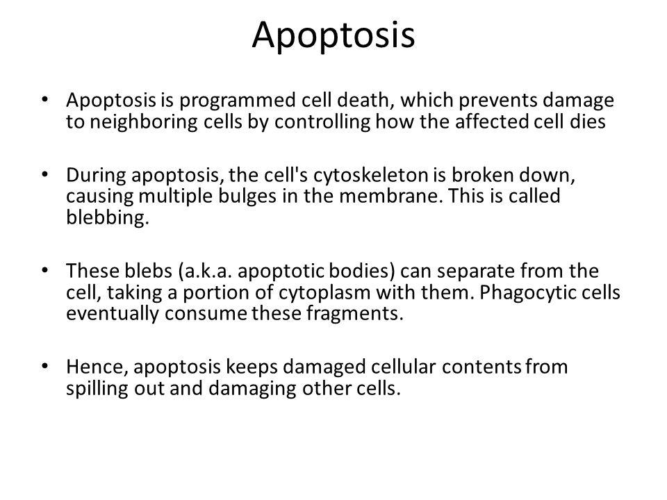 Regulation of autophagy and necrosis.A, autophagy.