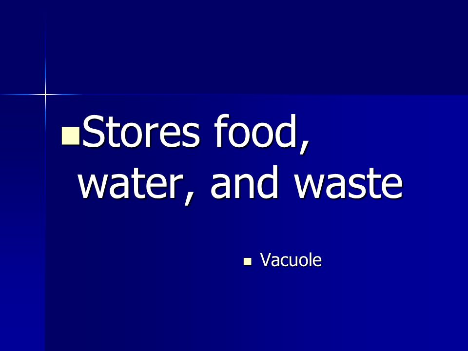 Stores food, water, and waste Stores food, water, and waste Vacuole