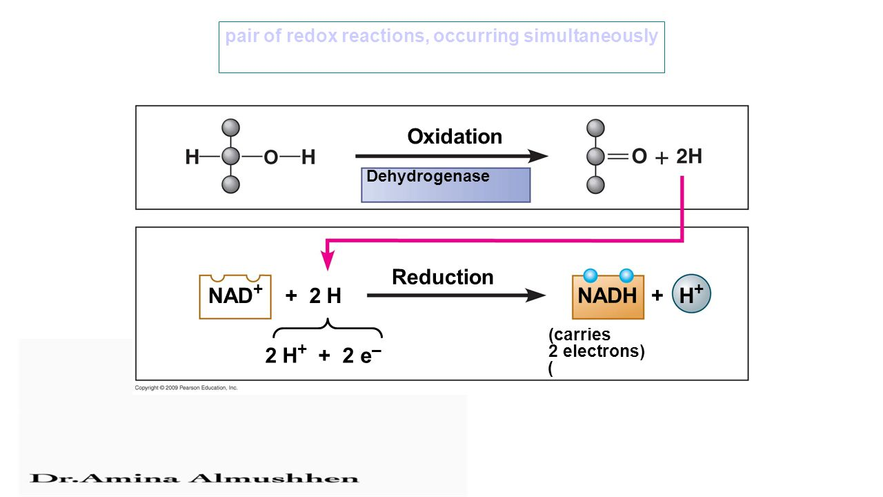 2 H + + 2 e – Oxidation Dehydrogenase Reduction NAD + + 2 H NADH + H+H+ (carries 2 electrons) ) pair of redox reactions, occurring simultaneously