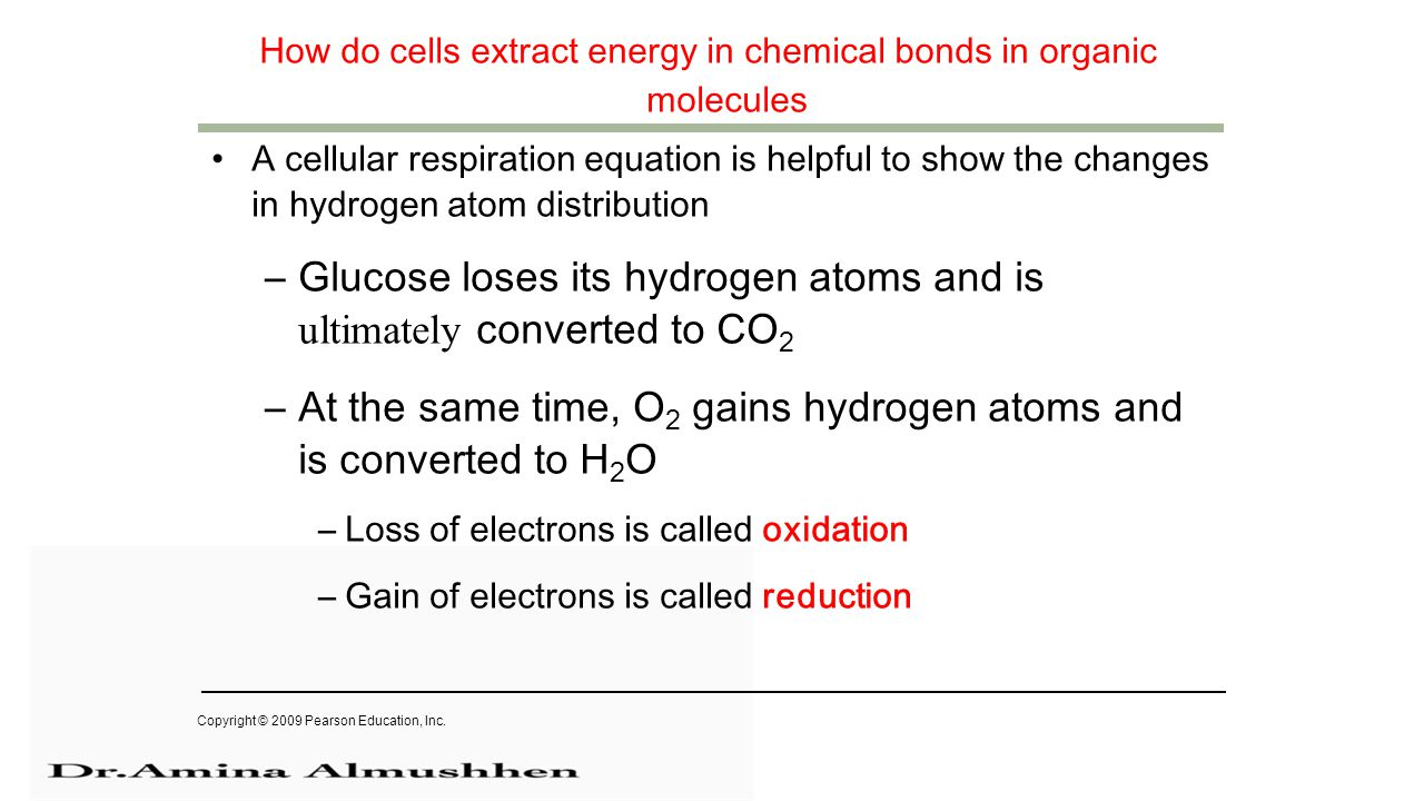 How do cells extract energy in chemical bonds in organic molecules A cellular respiration equation is helpful to show the changes in hydrogen atom distribution –Glucose loses its hydrogen atoms and is ultimately converted to CO 2 –At the same time, O 2 gains hydrogen atoms and is converted to H 2 O –Loss of electrons is called oxidation –Gain of electrons is called reduction Copyright © 2009 Pearson Education, Inc.