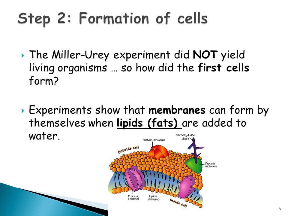  The Miller-Urey experiment did NOT yield living organisms … so how did the first cells form.