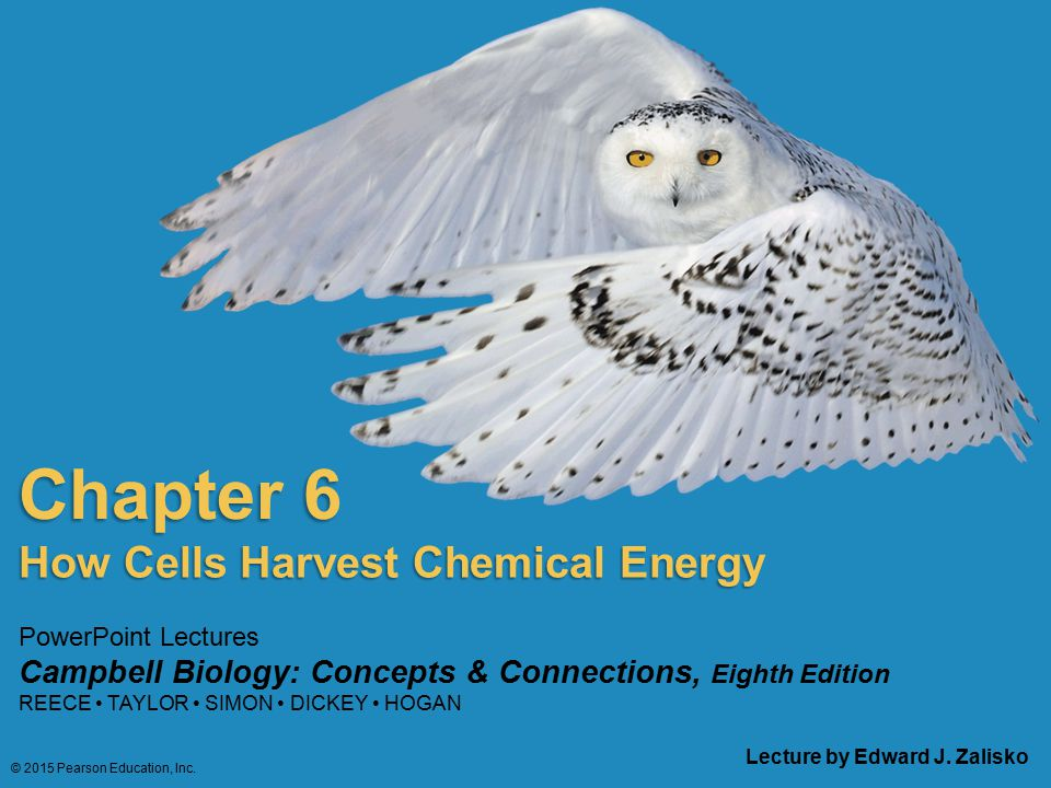 PowerPoint Lectures Campbell Biology: Concepts & Connections, Eighth Edition REECE TAYLOR SIMON DICKEY HOGAN Chapter 6 Lecture by Edward J. Zalisko Ho