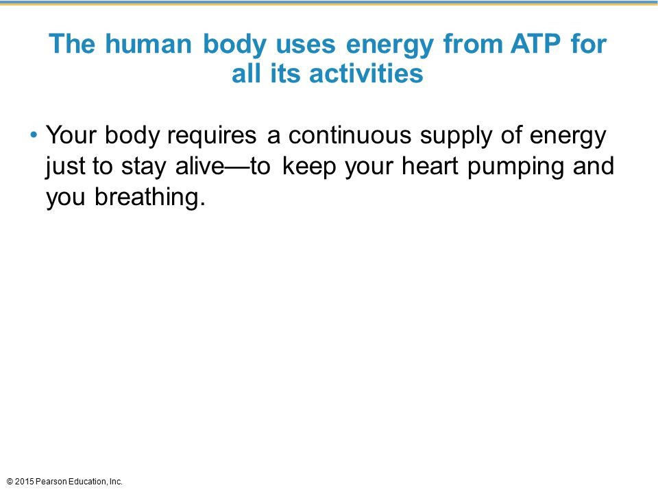 The human body uses energy from ATP for all its activities Your body requires a continuous supply of energy just to stay alive—to keep your heart pumping and you breathing.