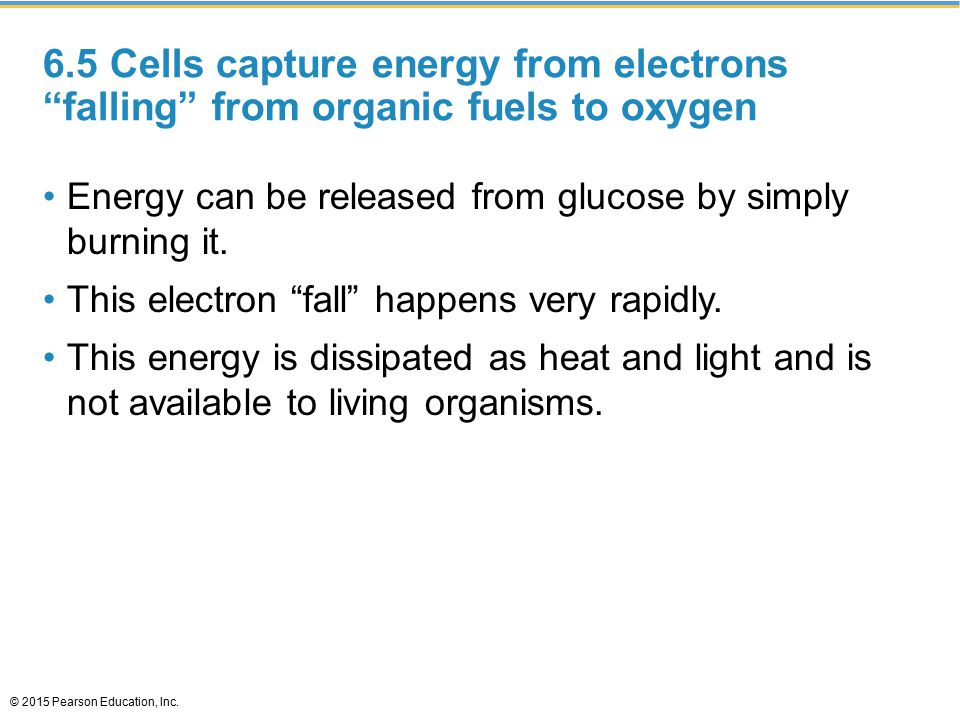 """6.5 Cells capture energy from electrons """"falling"""" from organic fuels to oxygen Energy can be released from glucose by simply burning it. This electron"""