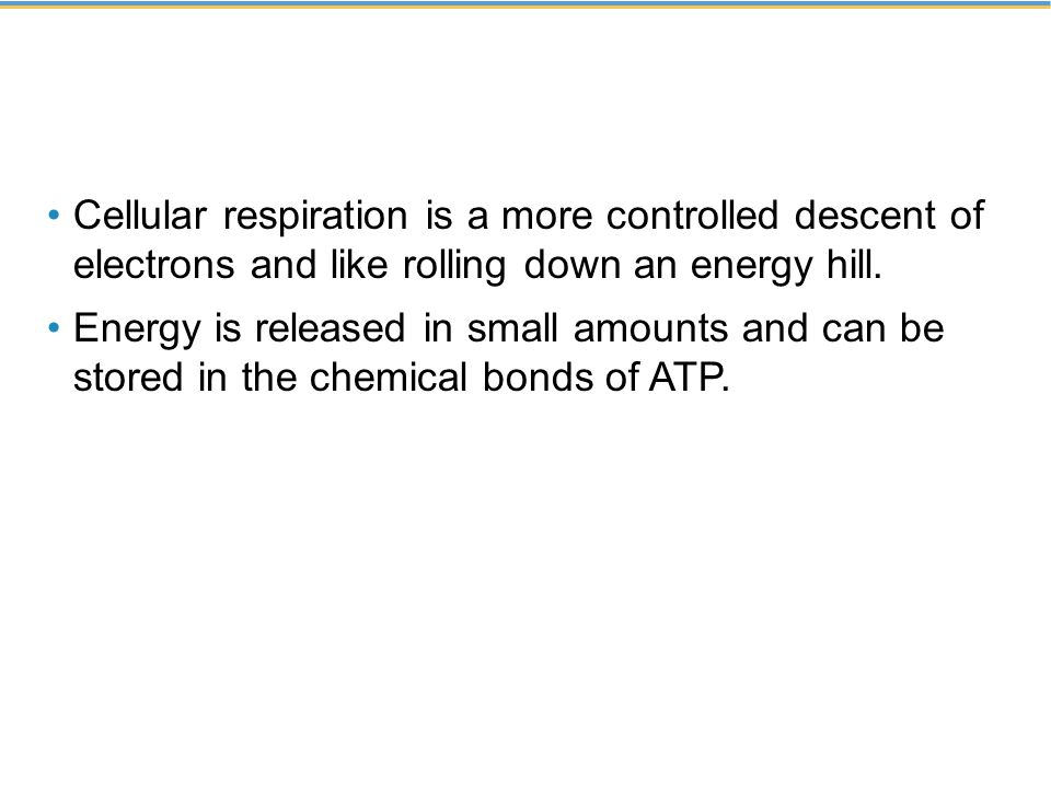 Cellular respiration is a more controlled descent of electrons and like rolling down an energy hill.