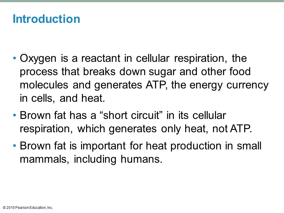 Introduction Oxygen is a reactant in cellular respiration, the process that breaks down sugar and other food molecules and generates ATP, the energy currency in cells, and heat.