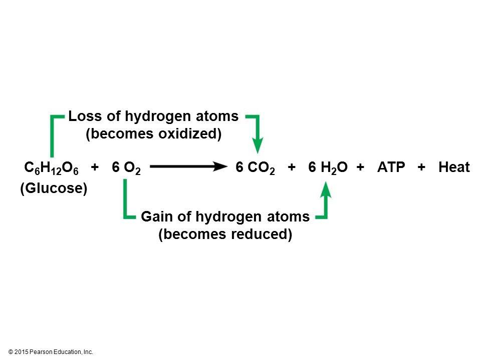 © 2015 Pearson Education, Inc. Loss of hydrogen atoms (becomes oxidized) Gain of hydrogen atoms (becomes reduced) (Glucose) C 6 H 12 O 6 + 6 O 2 6 CO