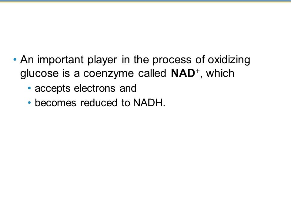 An important player in the process of oxidizing glucose is a coenzyme called NAD +, which accepts electrons and becomes reduced to NADH.
