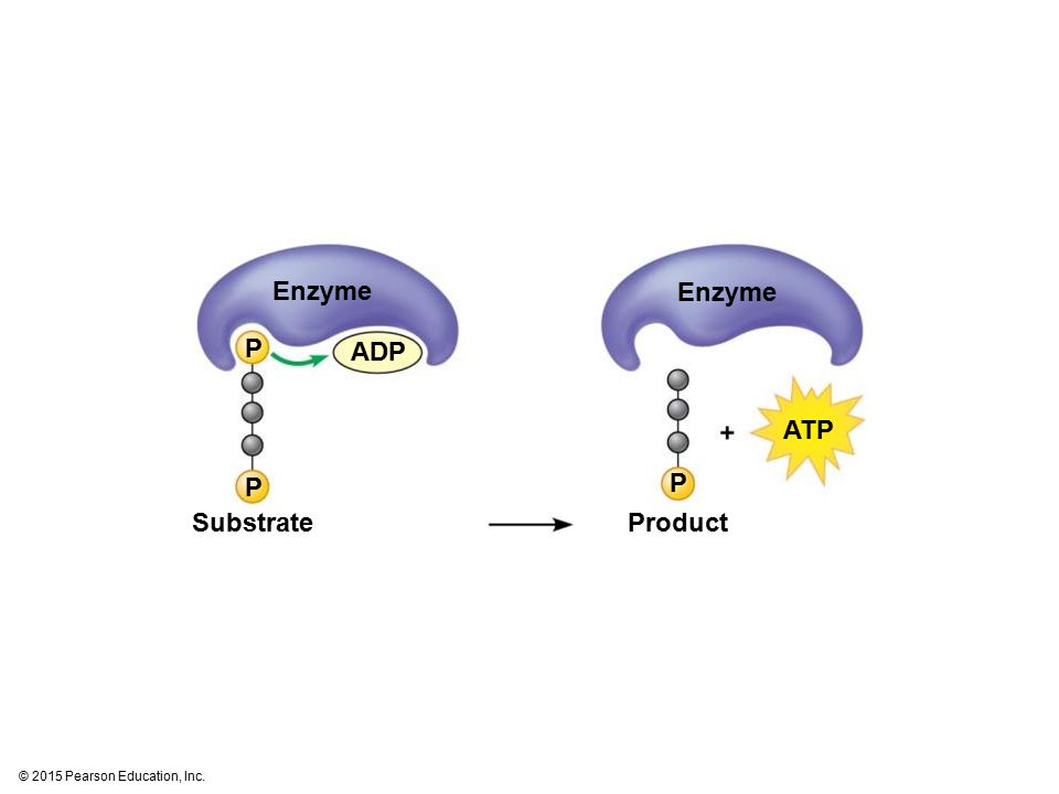 Enzyme ADP SubstrateProduct P P P ATP