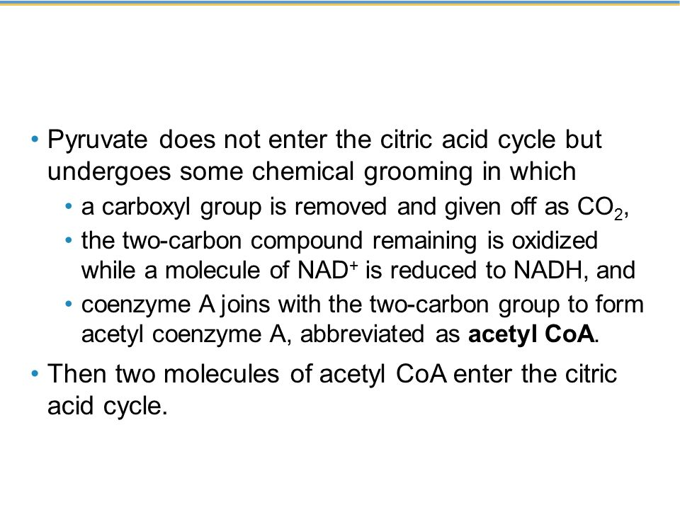 Pyruvate does not enter the citric acid cycle but undergoes some chemical grooming in which a carboxyl group is removed and given off as CO 2, the two-carbon compound remaining is oxidized while a molecule of NAD + is reduced to NADH, and coenzyme A joins with the two-carbon group to form acetyl coenzyme A, abbreviated as acetyl CoA.