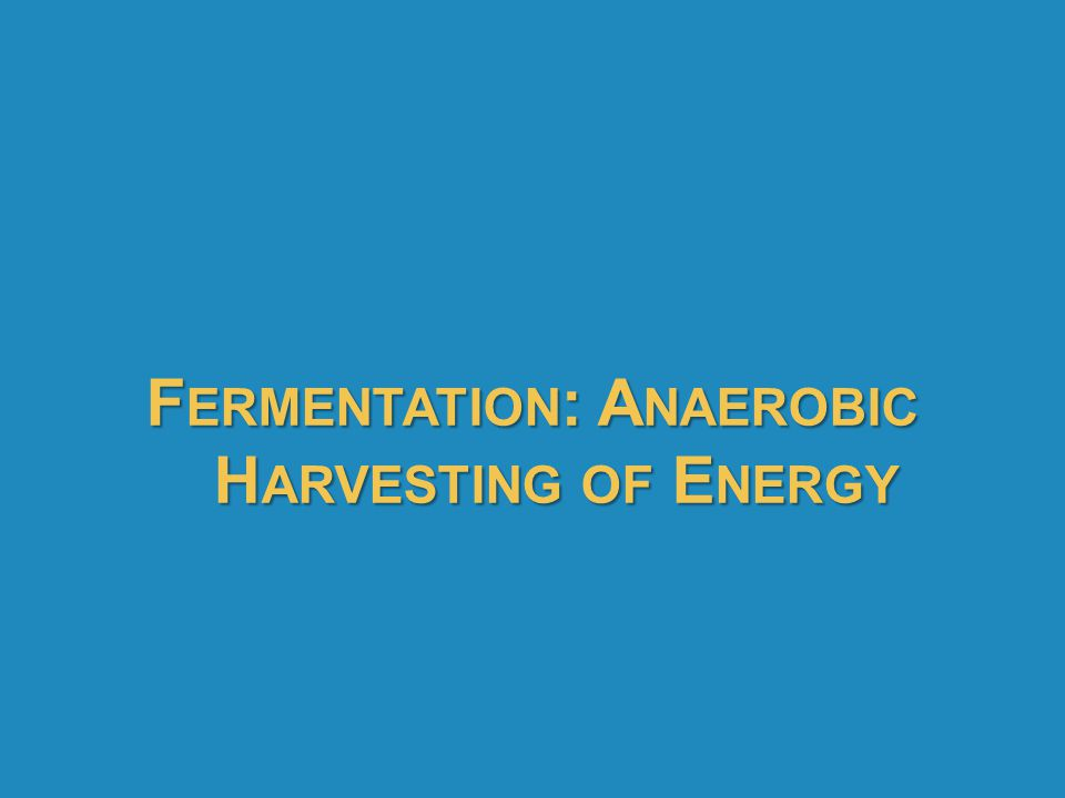 F ERMENTATION : A NAEROBIC H ARVESTING OF E NERGY