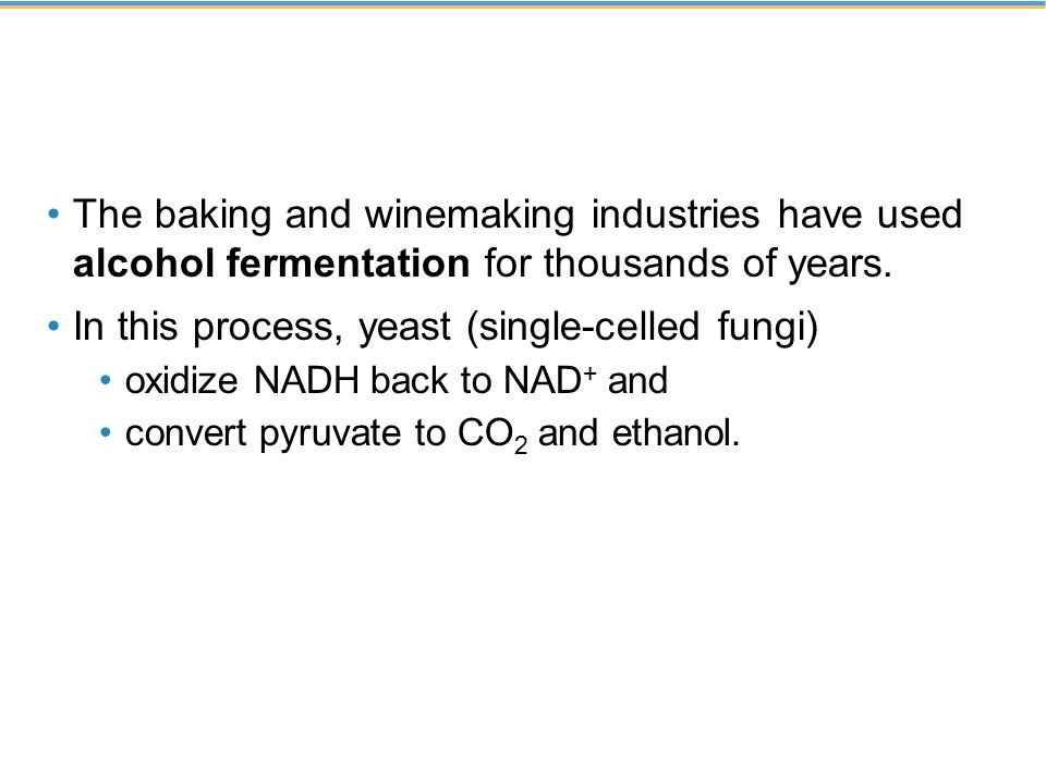 The baking and winemaking industries have used alcohol fermentation for thousands of years.