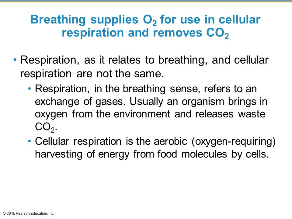 Breathing supplies O 2 for use in cellular respiration and removes CO 2 Respiration, as it relates to breathing, and cellular respiration are not the